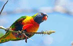 Picture bird, paint, branch, feathers, beak, parrot