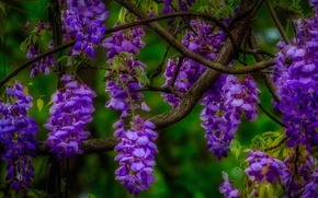 Picture macro, flowers, branch, inflorescence