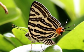 Picture macro, pattern, butterfly, wings, insect