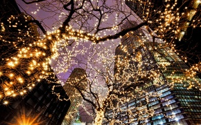 Picture light, trees, the city, lights, building, skyscrapers, the evening, lighting, backlight, Chicago, USA, Il, garland, …