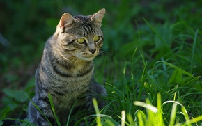 Picture grass, eyes, Kote