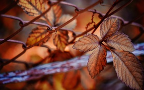 Picture nature, mesh, autumn, leaves