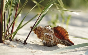 Picture sand, beach, grass, shell, RAPAN