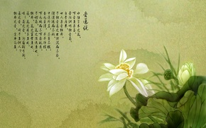 Wallpaper Lotus, flower, characters