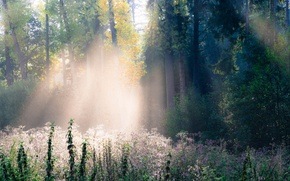 Picture autumn, forest, grass, rays, light, trees