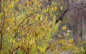 Picture autumn, leaves, drops, rain