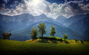 Picture greens, grass, clouds, trees, mountains, glade, Austria, hdr, forest