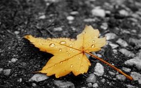 Picture autumn, Nature