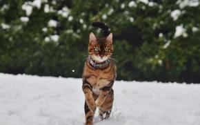 Picture cat, winter, snow
