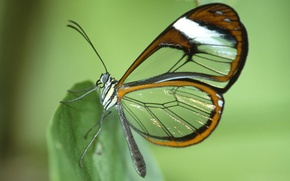 Picture sheet, butterfly, wings, moth