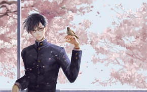Picture bird, spring, art, guy, Sakamoto, Sakamoto, Sakamoto desu ga?