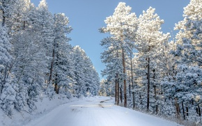 Wallpaper winter, road, forest, the sky, snow, photo