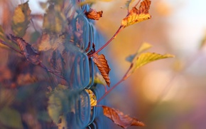Picture bokeh, macro, foliage, the fence, mesh, branches, autumn