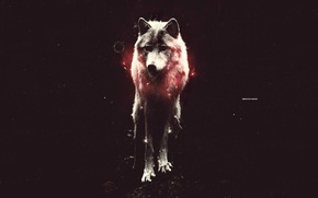Picture light, red, wolf, is