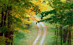 Wallpaper road, autumn, trees, Leaves