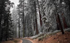 Wallpaper road, forest, trees, landscape