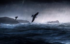Picture sea, birds, storm