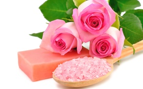 Picture roses, pink, flowers, roses, spa, salt