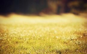 Picture greens, grass, the sun, drops, macro, nature, Rosa, bokeh