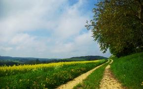 Wallpaper flowers, field, summer, road, trees, grass, forest