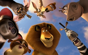 Picture animals, animals, cartoon, lemurs, Madagascar 3, Alex the lion, king Julian, Hippo Gloria, mort, Zebra ...