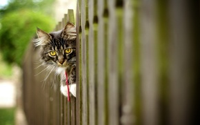 Picture cat, background, the fence