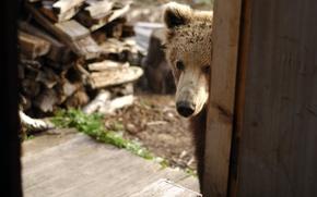 Picture house, animal, Wallpaper, nose, bear, wood, wallpaper, bear, visit, came