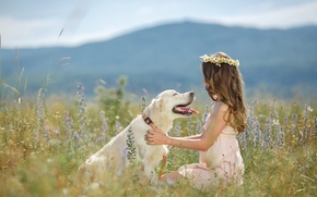 Picture nature, each, chamomile, dog, girl, wreath
