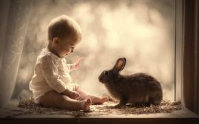 Picture boy, rabbit, window