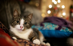 Wallpaper cat, cats wallpapers, Wallpaper with cats, lights