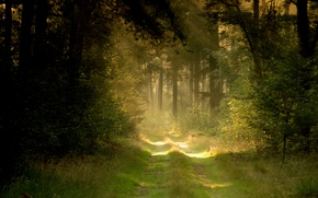 Picture road, forest, summer, nature
