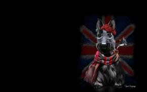 Picture tube, dog, minimalism, flag, art, cap, children's, Sherlock, Terrier, lorri kajenn the