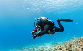 Picture sea, photo, sport, underwater world