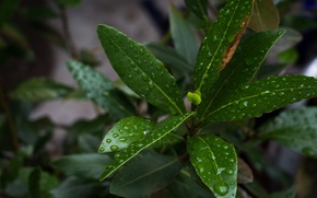 Picture drops, macro, Nature