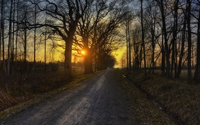 Picture road, autumn, trees, sunset, Nature, road, trees, sunset, autumn