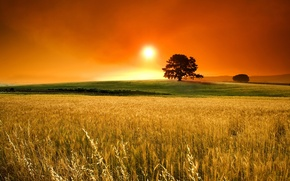 Wallpaper the sun, horizon, field, spikelets