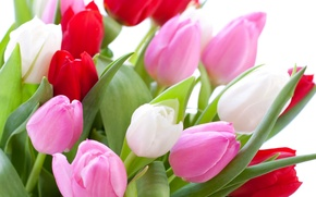 Wallpaper white background, colorful, bouquet, buds, closeup, tulips, leaves