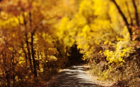 Wallpaper bokeh, road, foliage, autumn, nature