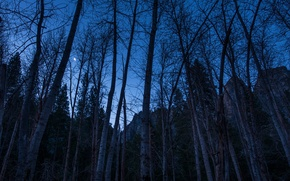 Picture the sky, trees, mountains, night, rocks, the moon, a month