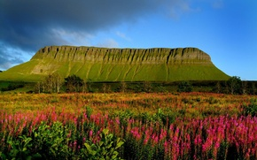 Picture the sky, grass, trees, flowers, clouds, meadow, Ireland, Table mountain, Ben Bulben