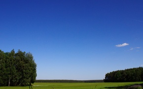Picture field, forest, landscape