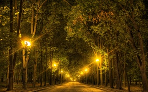 Picture trees, night, lights, Park, lights, Moscow, Russia, alley, Lomonosov Moscow State University