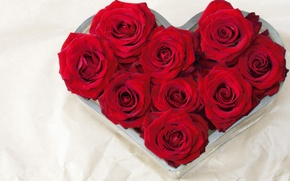 Picture flower, love, flowers, nature, gift, heart, roses, bouquet, red, heart, recognition