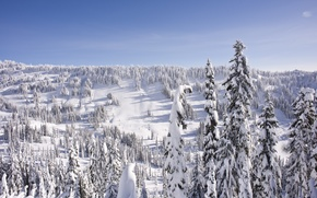 Picture winter, forest, the sky, snow, landscape, hills, tree, spruce, horizon, frost