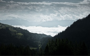 Picture forest, clouds, fog, hills, view, spruce, coniferous