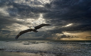 Picture sea, nature, bird