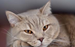 Picture sadness, eyes, cat, loneliness, sadness, waiting, face, sad, eyes, cat, animal, pet