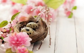 Picture flowers, branches, holiday, eggs, spring, Easter, socket, flowering, quail