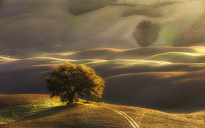 Picture light, tree, hills, morning, Italy, Tuscany