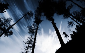Picture the sky, clouds, trees, trunks, the evening, hill, shadows, silhouettes, the hill